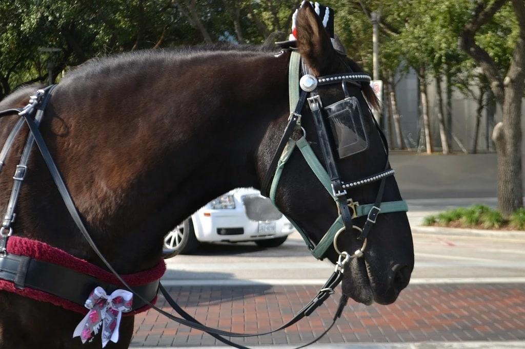 Conseils pour débuter l'équitation